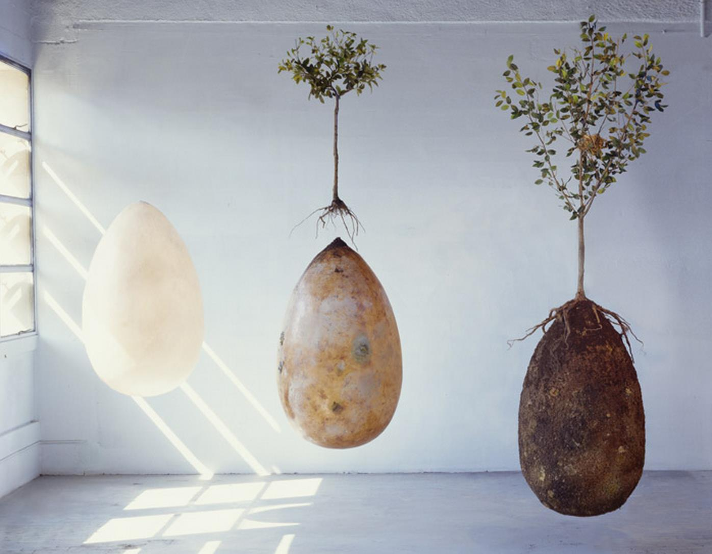 Organic Burial Pods To Replace Tombstones With Trees