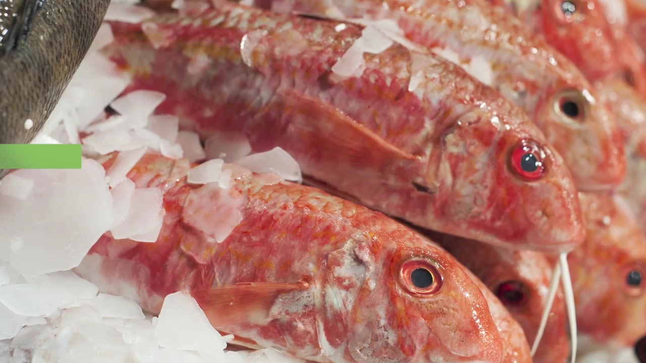 How to Choose Eco-Friendly Seafood