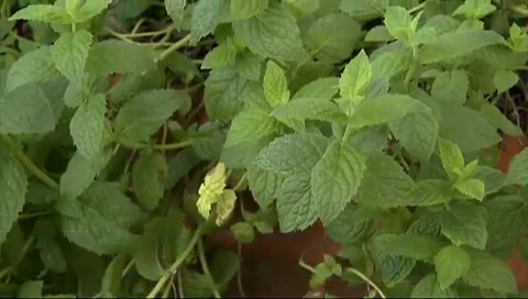 Strawberry Mint Smoothie Recipe