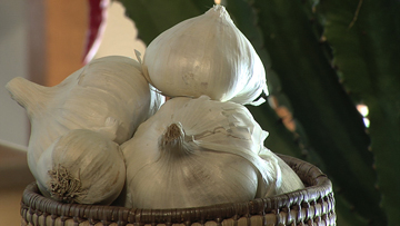 Garlic Health Facts