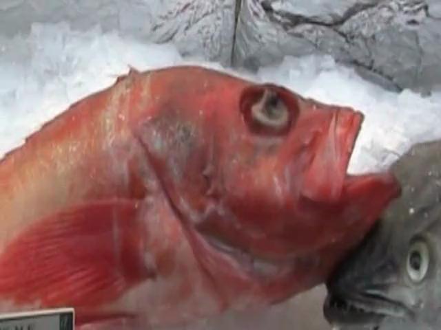 Tips on Buying Fresh Fish