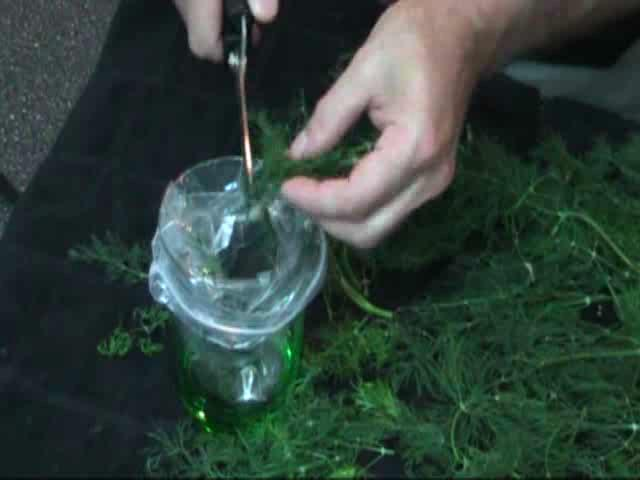 Dry Herbs Instead of Killing Them