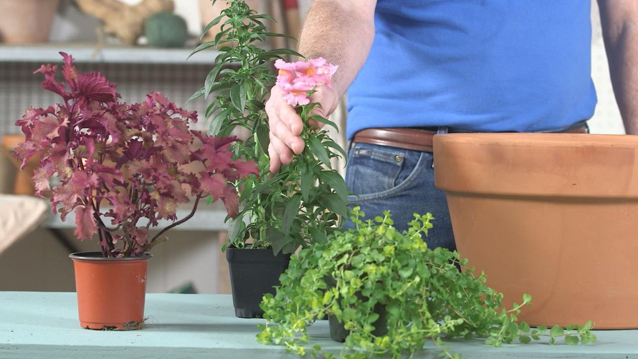 5 Container Gardening Mistakes