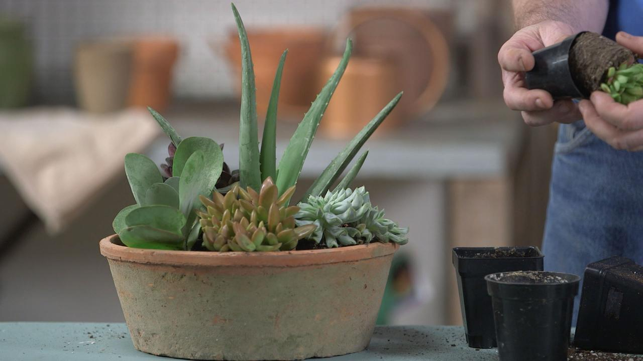 How to Make a Succulent Container