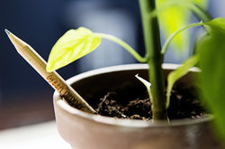 Amazing Pencil Turns Into A Plant When You Bury It