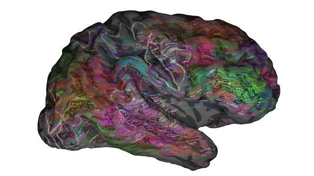 Scientists Discover Human Brain Is a Living Word Cloud