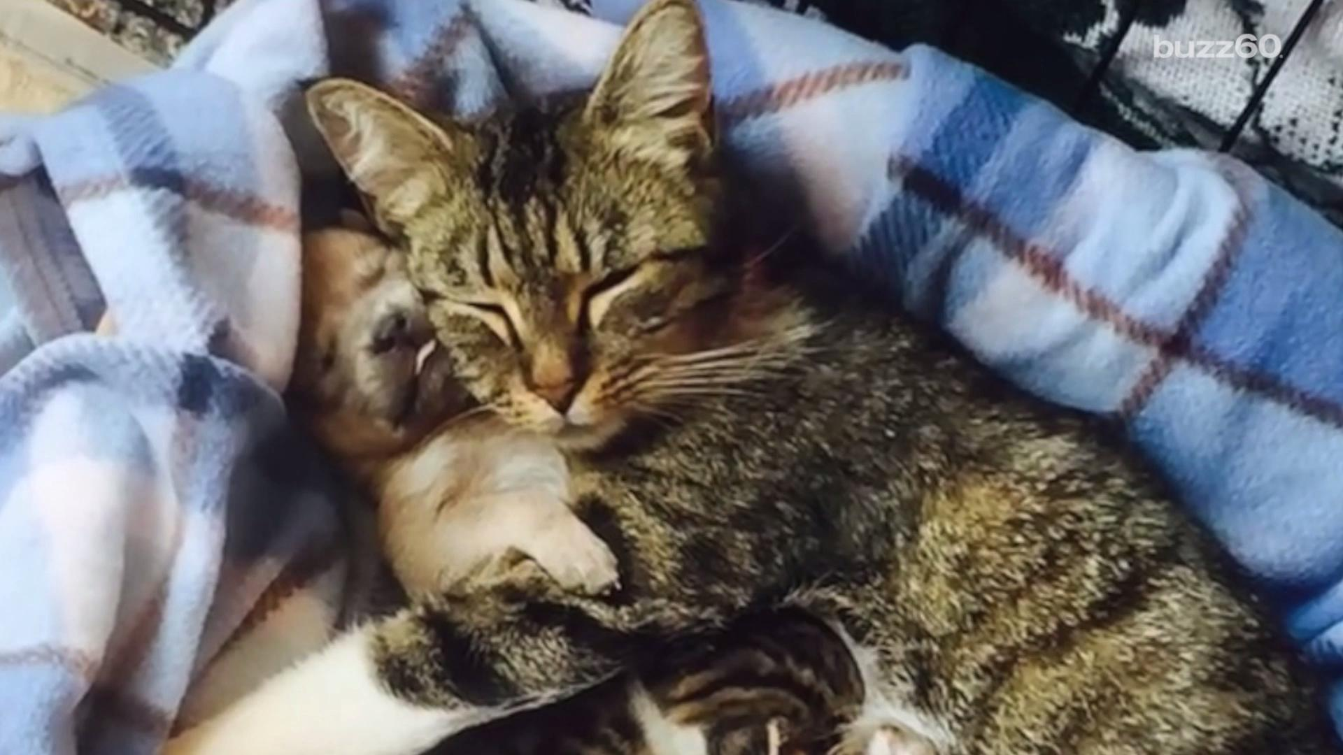 Orphaned Puppy Adopted by a Cat