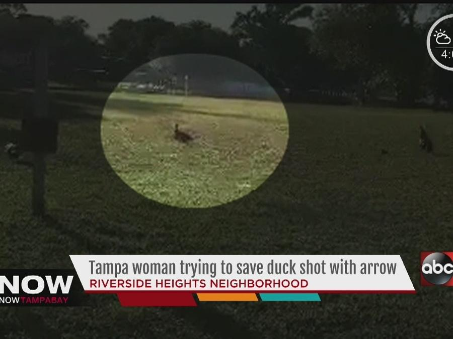 Tampa woman trying to save duck show with arrow in Riverside Heights neighborhood