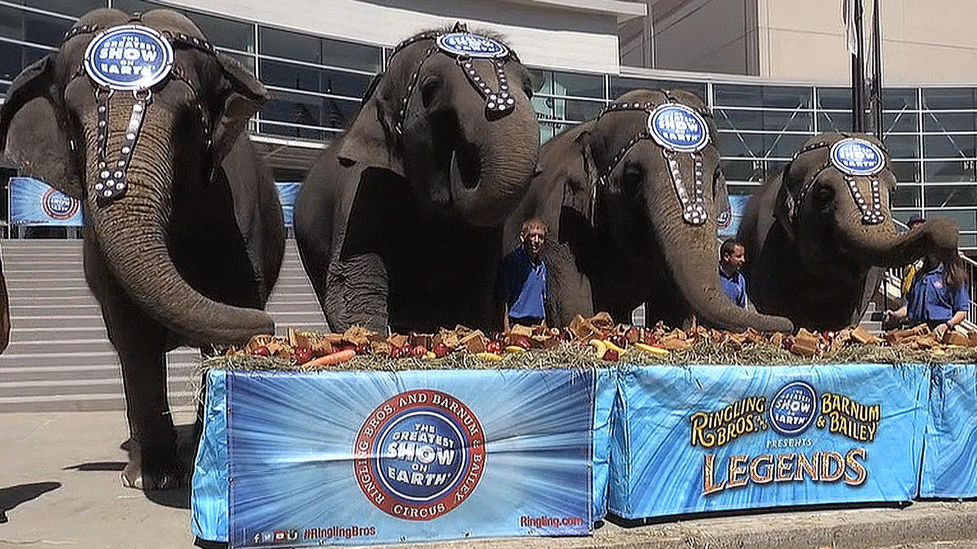 Ringling Bros. Elephants Treated to Pre-Retirement Brunch