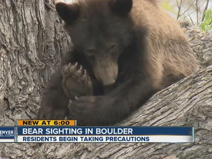 Bear sightings beginning in Boulder