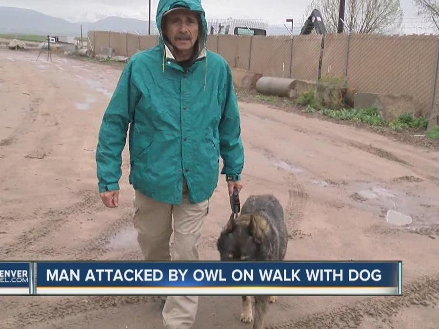 Man attacked by owl on hike