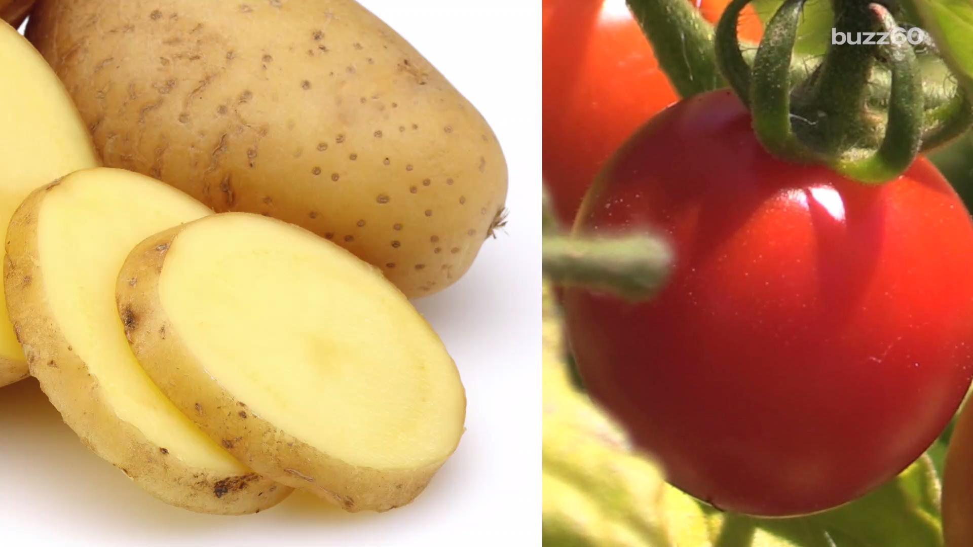 Plant That Grows Fries and Ketchup Going On Sale