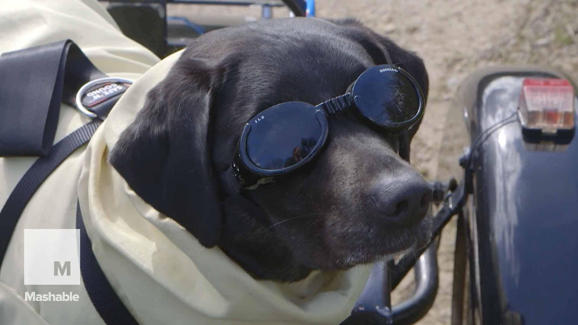 Motorcycling dog gets first four-legged Kevlar bike suit