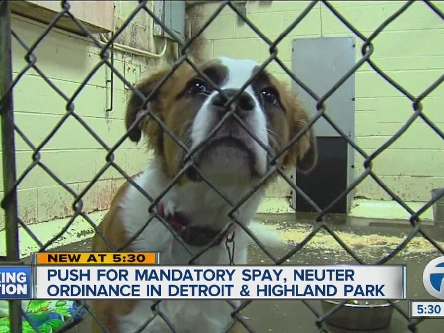 Push for mandatory spay, neuter ordinance in two cities