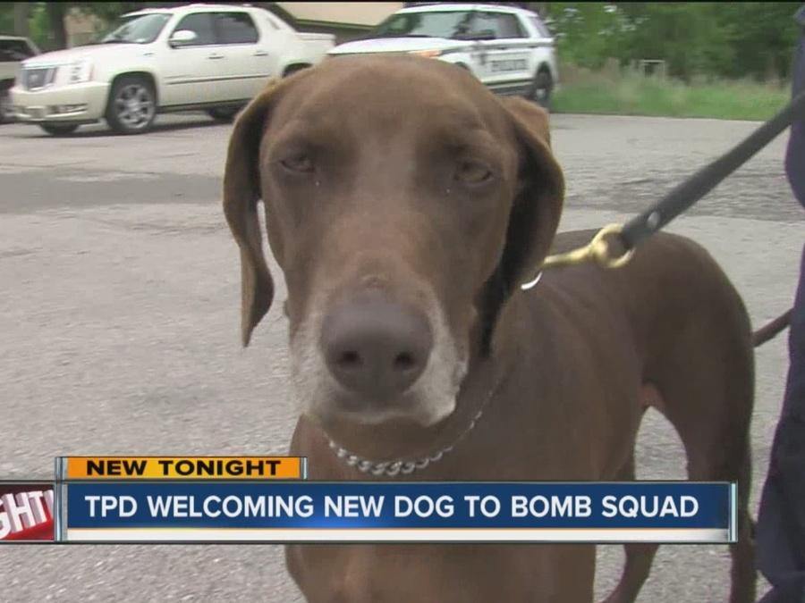 TPD Welcomes New Dog To Bomb Squad