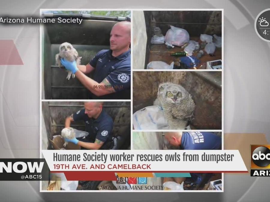 Arizona Humane Society worker rescues owls from dumpster