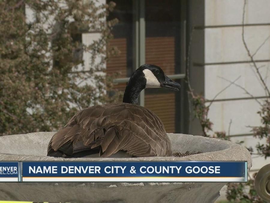 Name the Denver City & County building goose