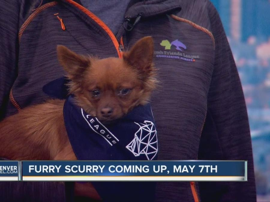 The annual Furry Scurry dog walk at Denver's Wash Park is one week away