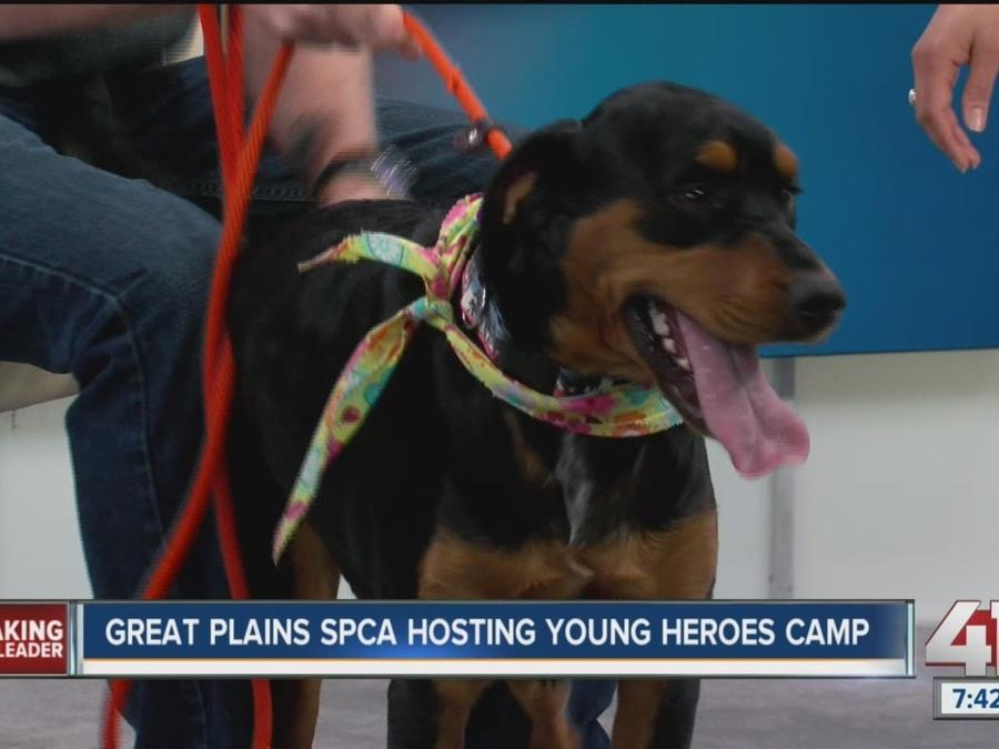Great Plains SPCA hosting Young Heroes Camp