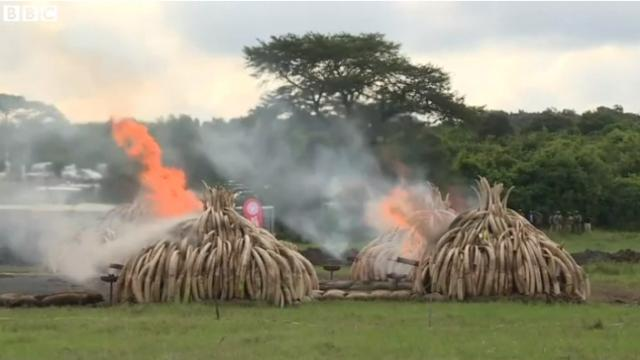 Kenya Sends Ivory Poachers a 105-Ton, Burning Message