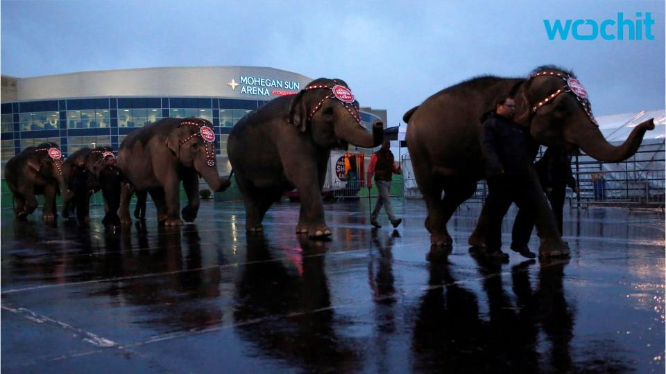On To The Elephant Farm: Ringling Bros. Circus Retires Elephants