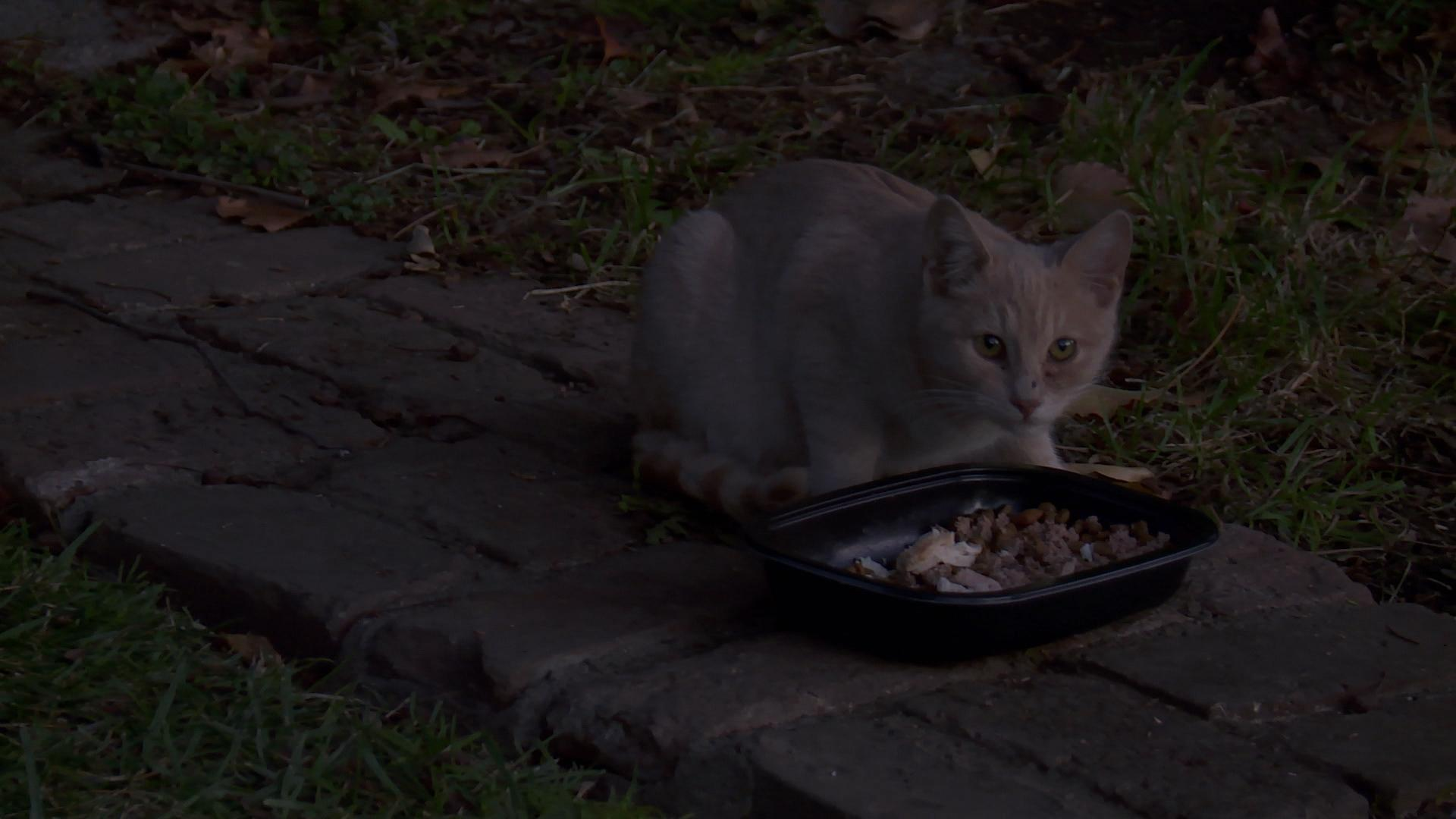 'My Cat From Hell': If You Feed Them, More Will Come