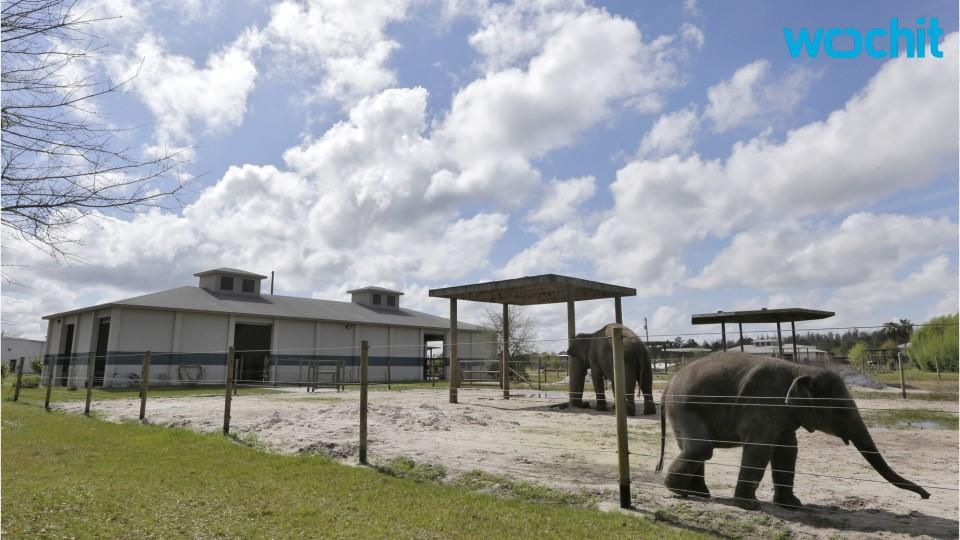 No Elephant in the Room: Ringling Bros. Retires Elephant Show