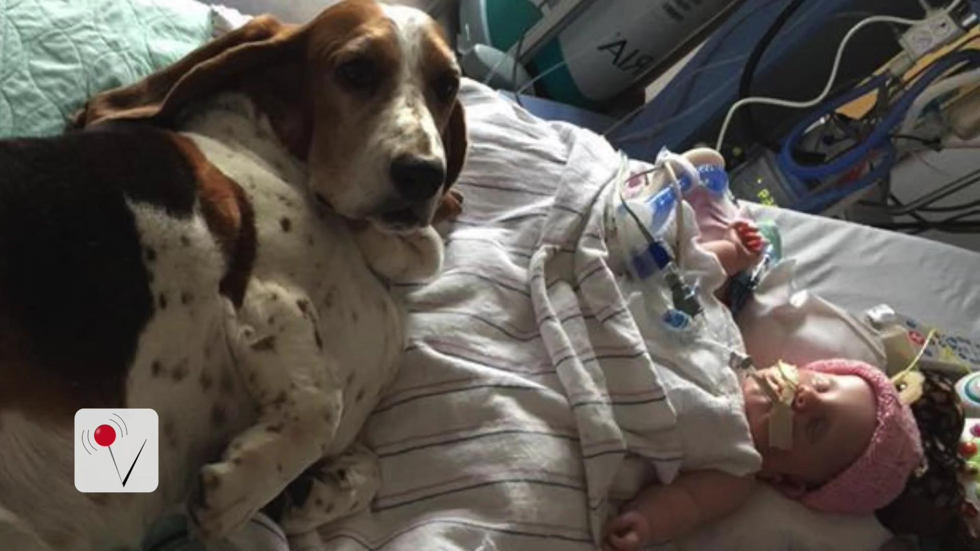 Family Dogs Keep Watch Over Baby Girl Left in Coma