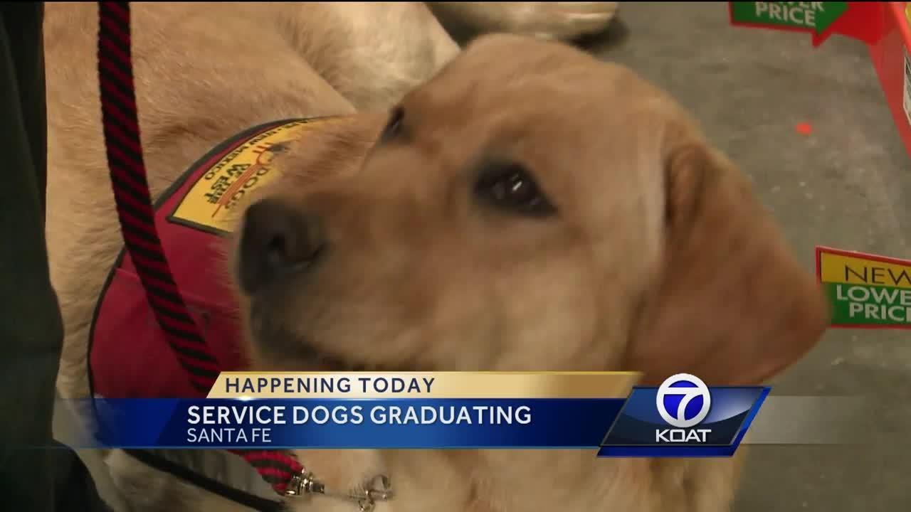 Service Dogs Graduating