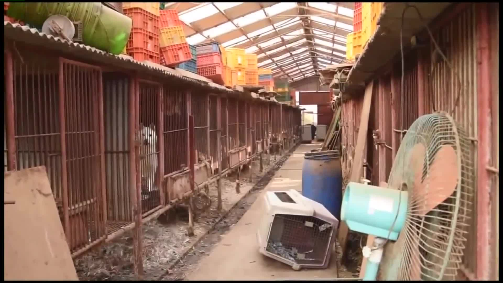 Dogs Rescued from Meat Farm in South Korea