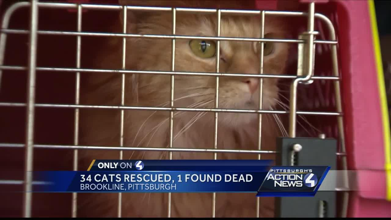 34 cats rescued from Brookline hoarding situation