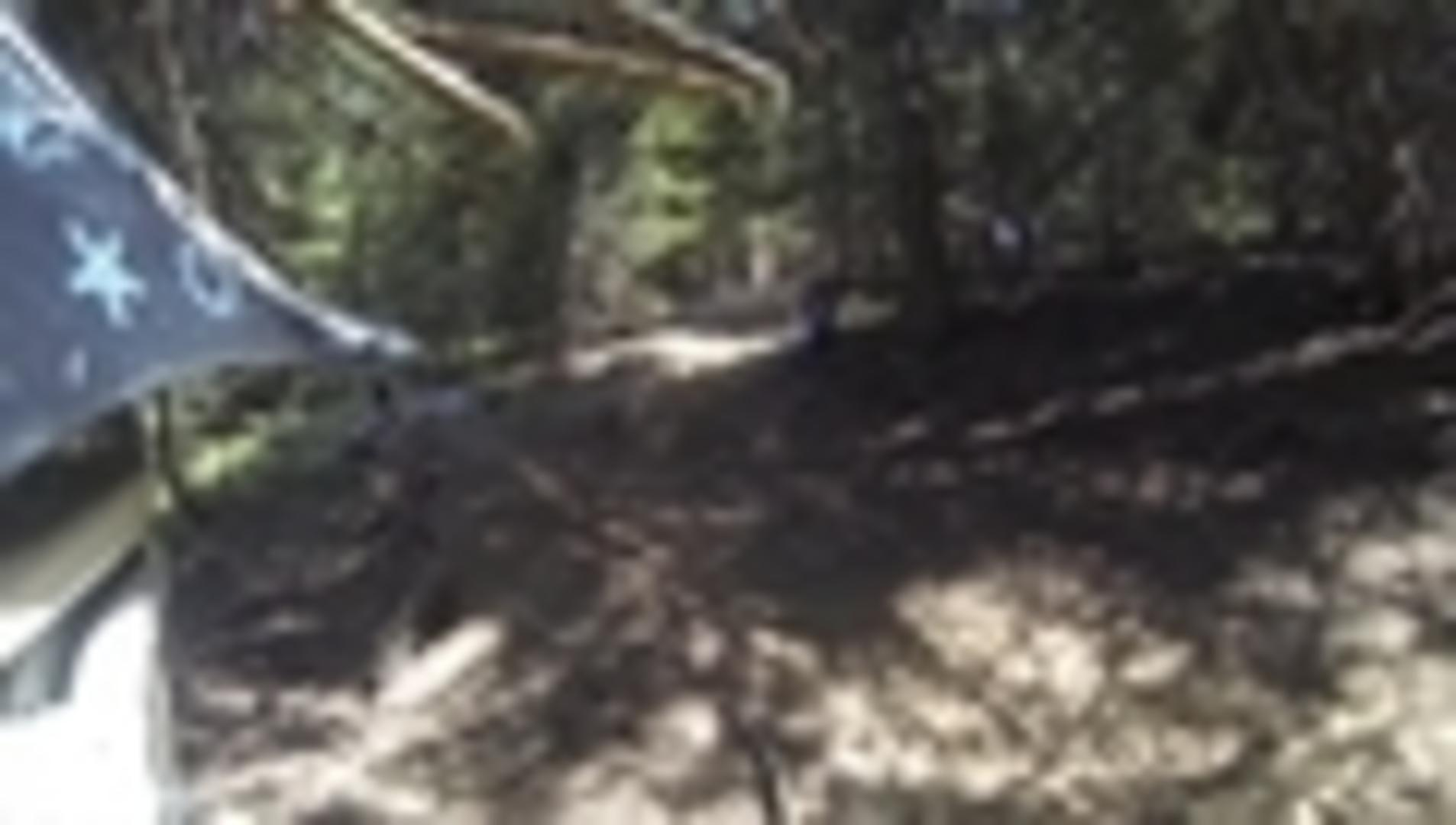 Mountain Bike Rider Loses Control and Smashes into Tree
