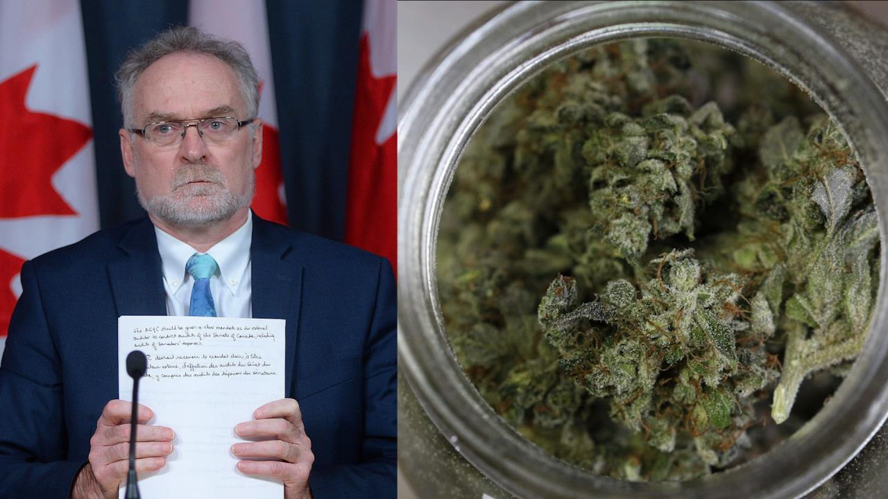 Auditor general slams costs of veterans' medical pot program