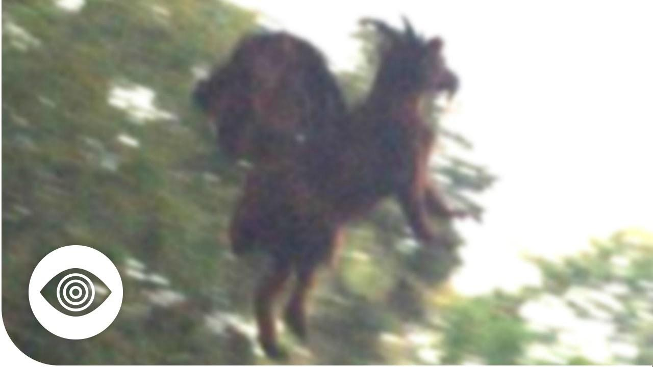 Does The Jersey Devil Exist?