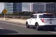Baby Geese Paralyse Traffic on Oakland Highway