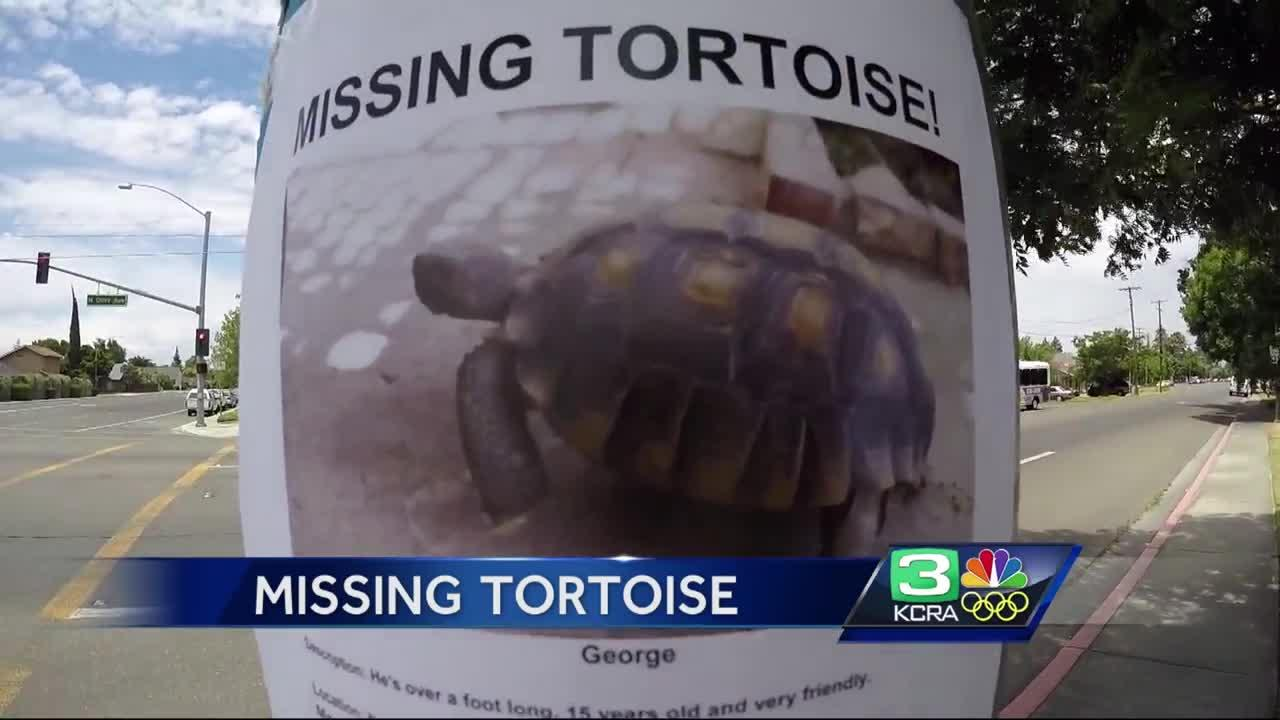Have you seen George the tortoise?