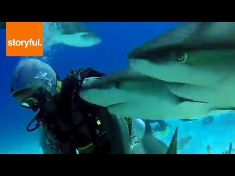 Divers Swim with Frenzy of Friendly Sharks