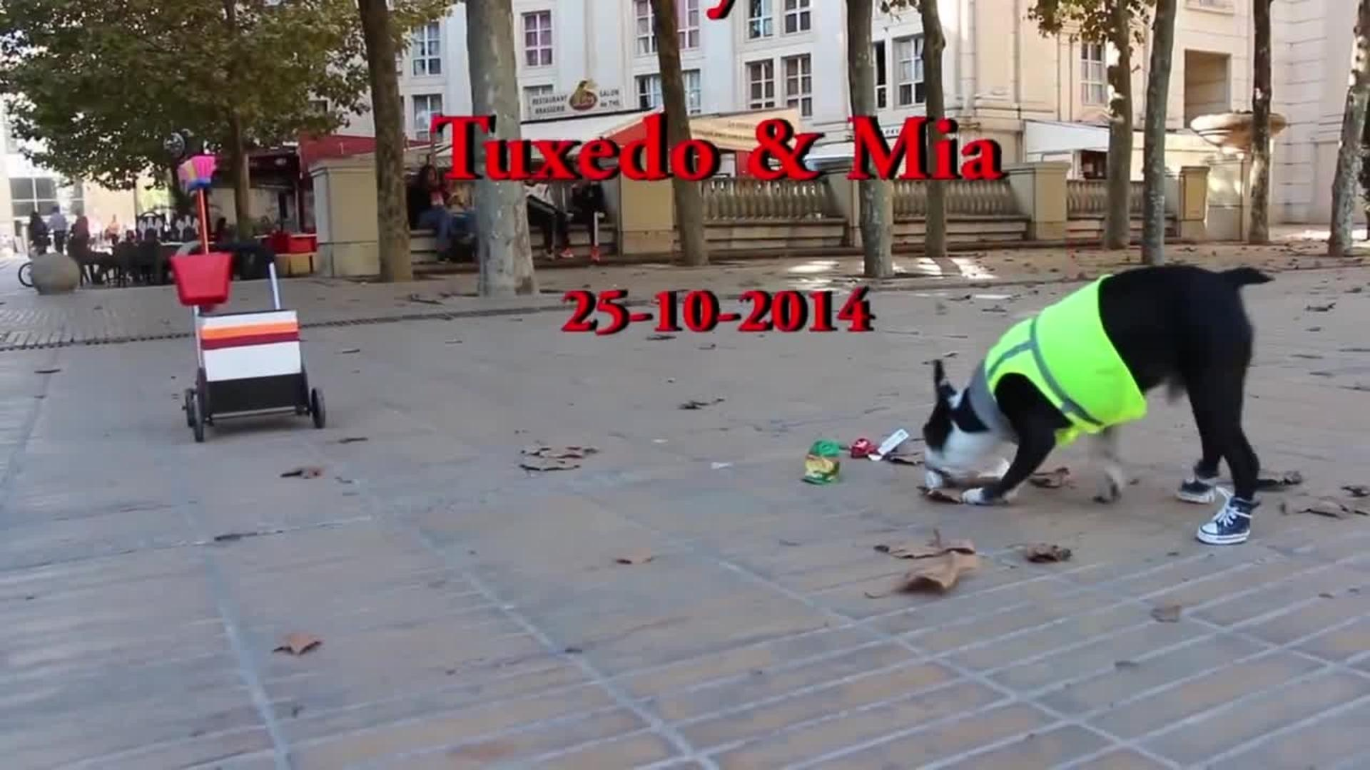 Boston Terriers Clean up the City