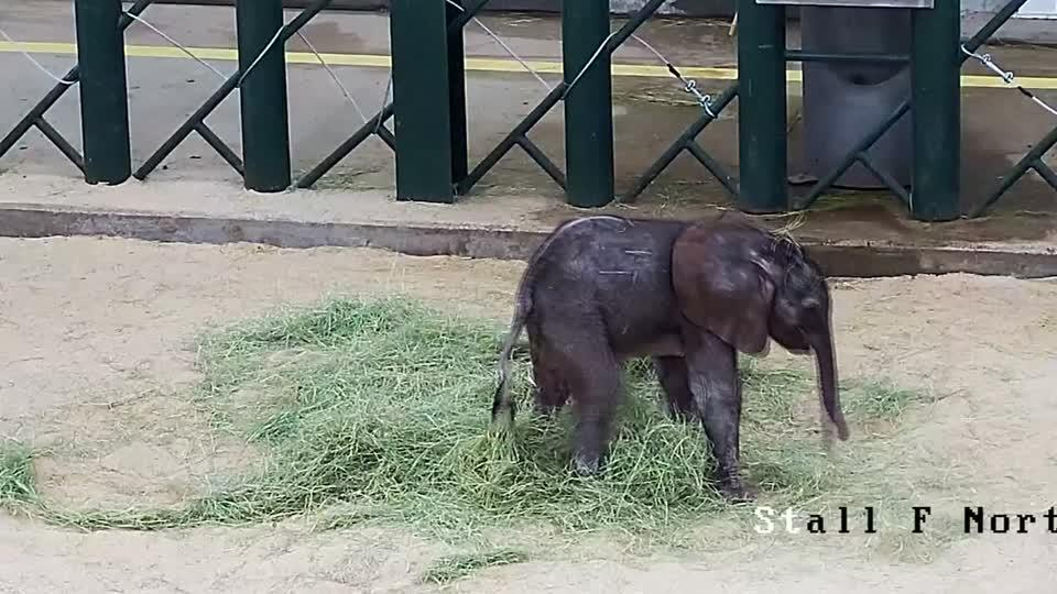 Baby elephant at Dallas Zoo