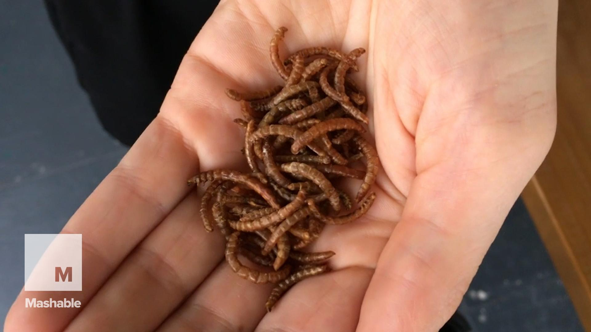 Snack on China's Tasty New Food Trend: Edible Worms
