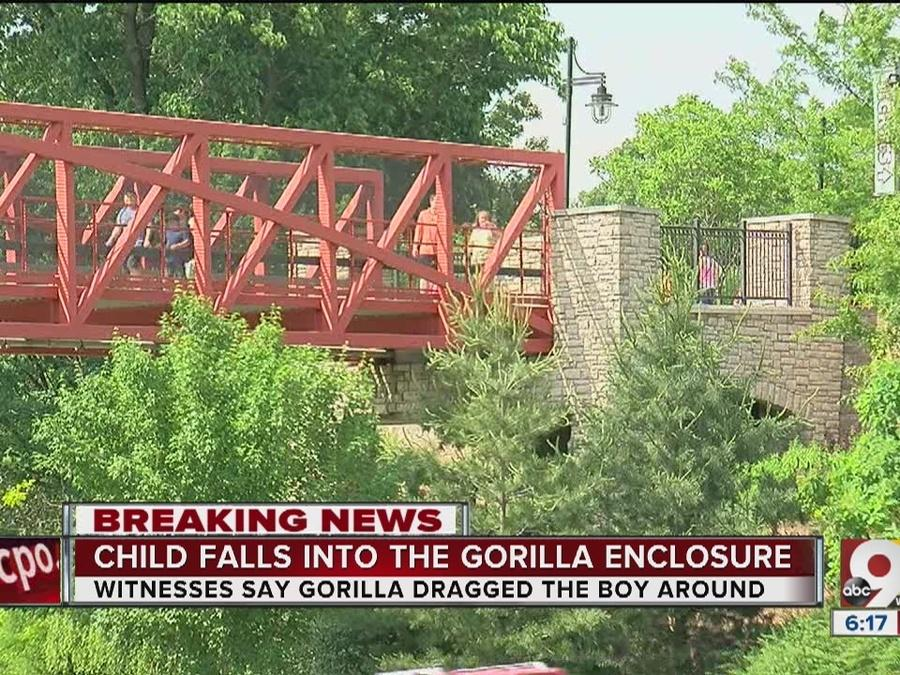 Zoo: Gorilla killed after dragging boy who fell into exhibit; child hospitalized