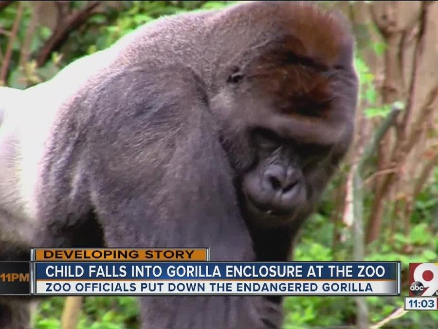 Child falls into gorilla enclosure at zoo