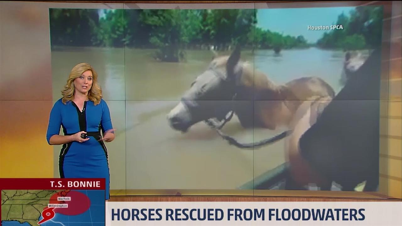 Horses Rescued From Flood Water Near Houston