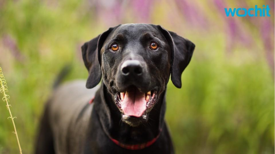 Utah Cops Introduce Dog That Can Detect Child Pornography