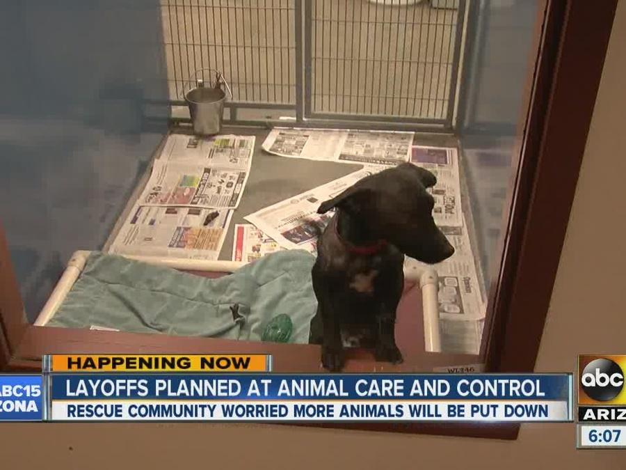 Layoffs planned at Animal Care and Control