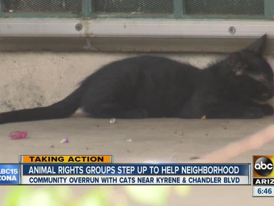 Animal rights groups step up to help neighborhood