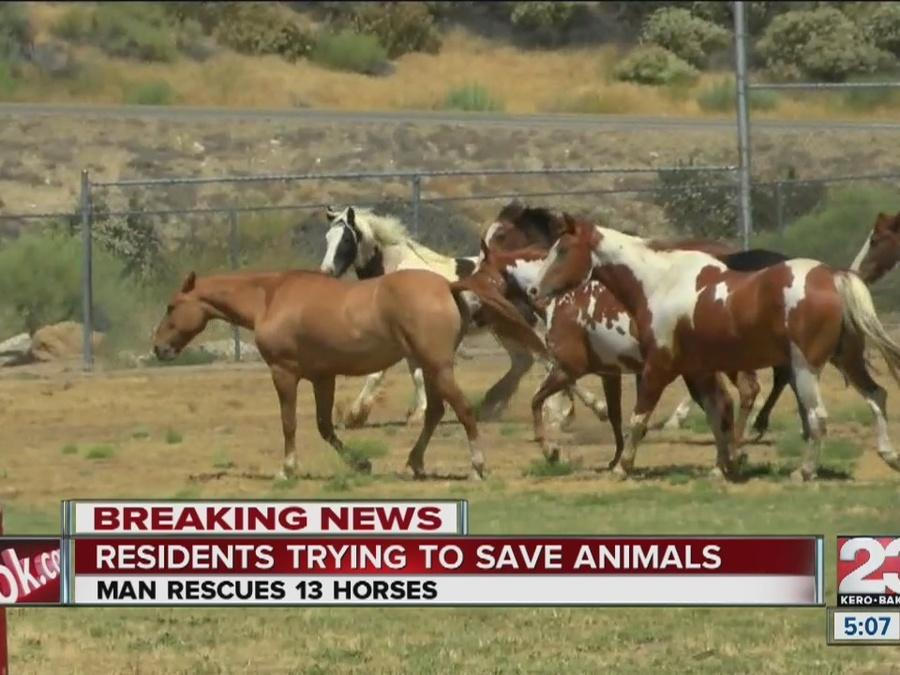 Man saves dozens of horses during Erskine Fire