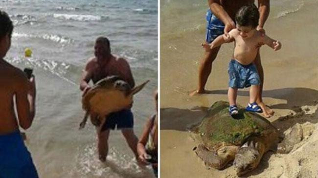 Tourists Leave Turtle on Brink of Death