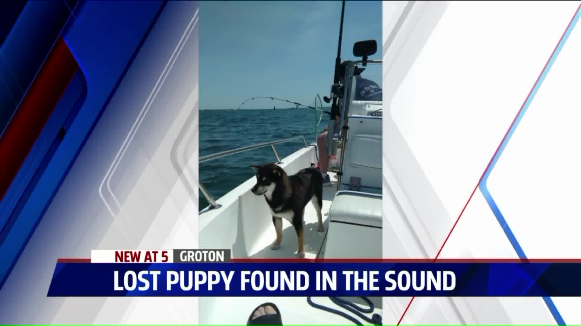 Puppy Presumed Dead at Sea Reunited with Family Thanks to Facebook Post