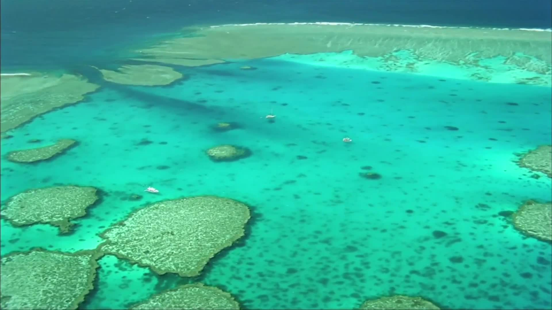 Some coral reefs thriving, says report